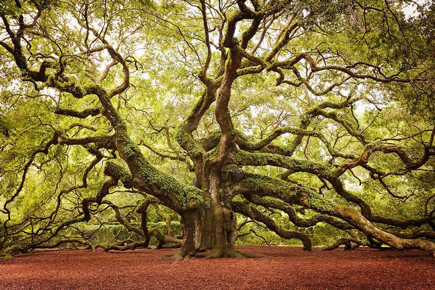 Natura jest cudem, świat jest baśnią.